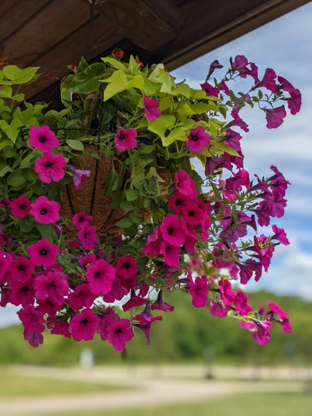 NS Park flowers
